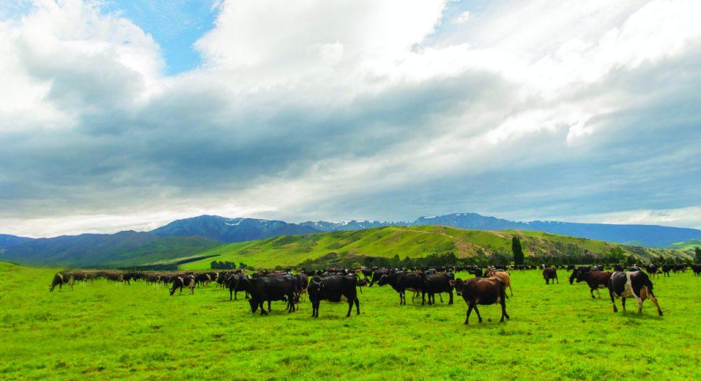 Ngành Nông nghiệp New Zealand